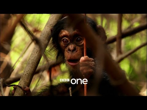 Life Story with David Attenborough: Trailer - BBC One